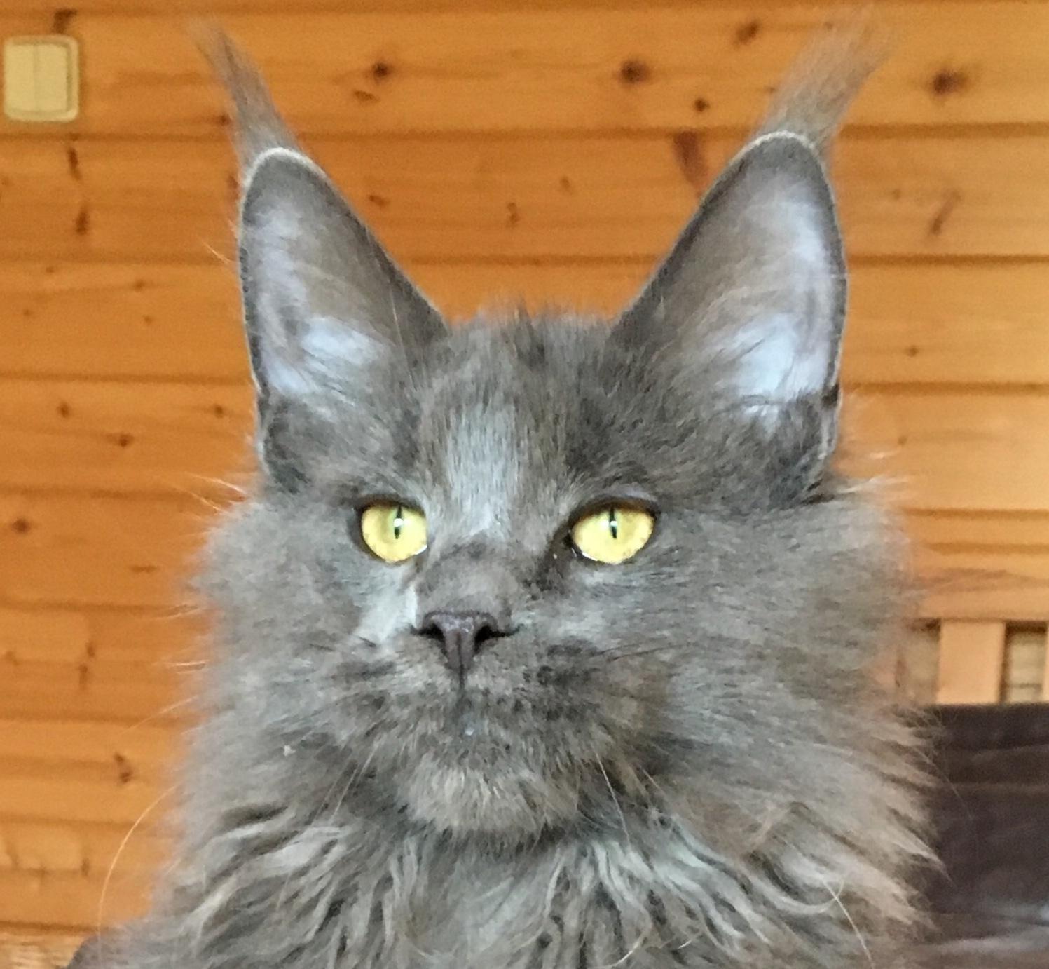 matka koťat VRH G 23.6.2018