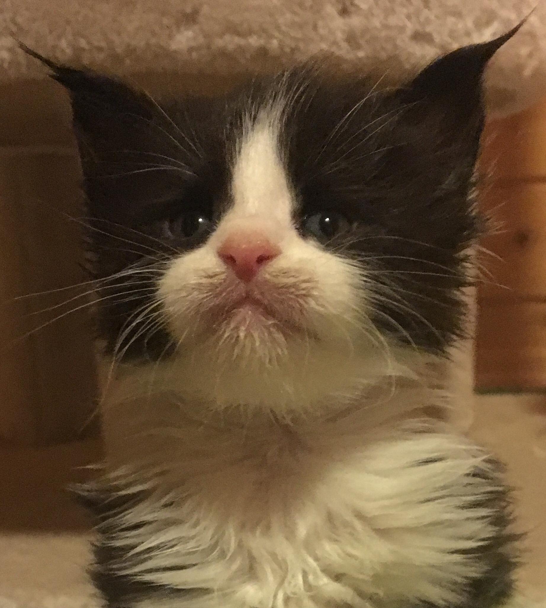 kočka 354VRH E     21.11.2017