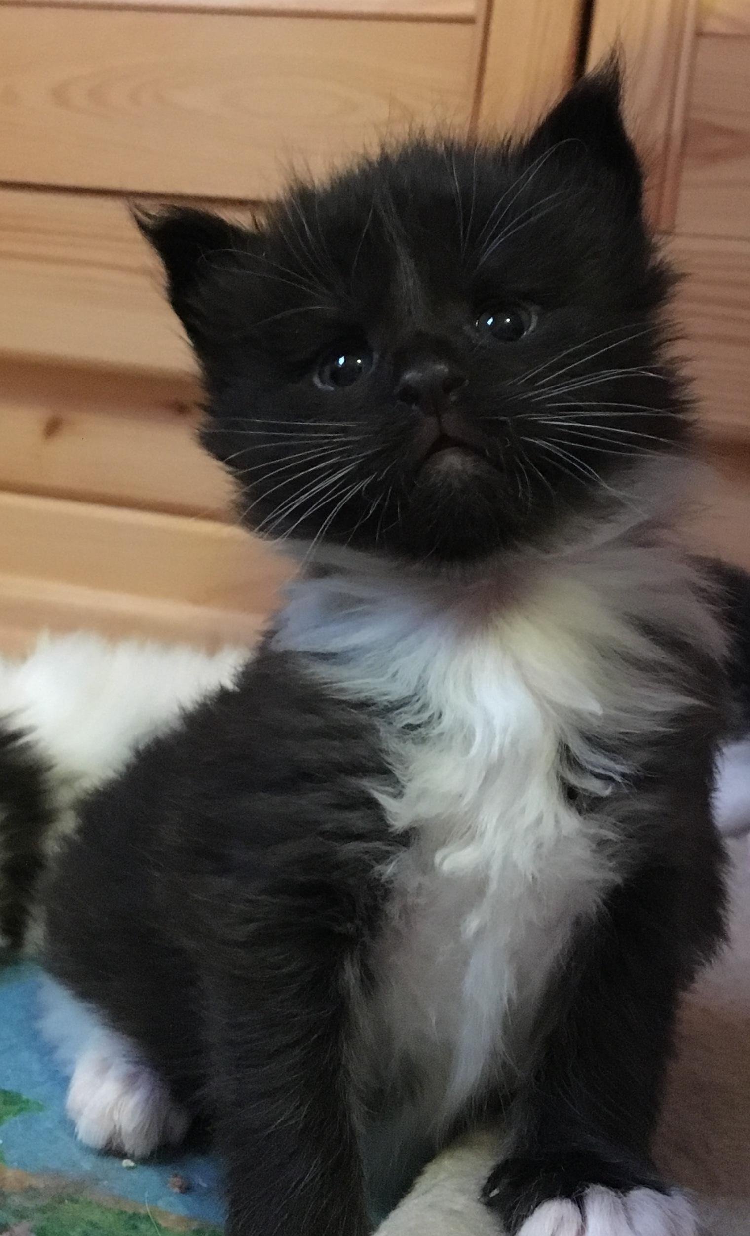 kočka 346VRH E     21.11.2017