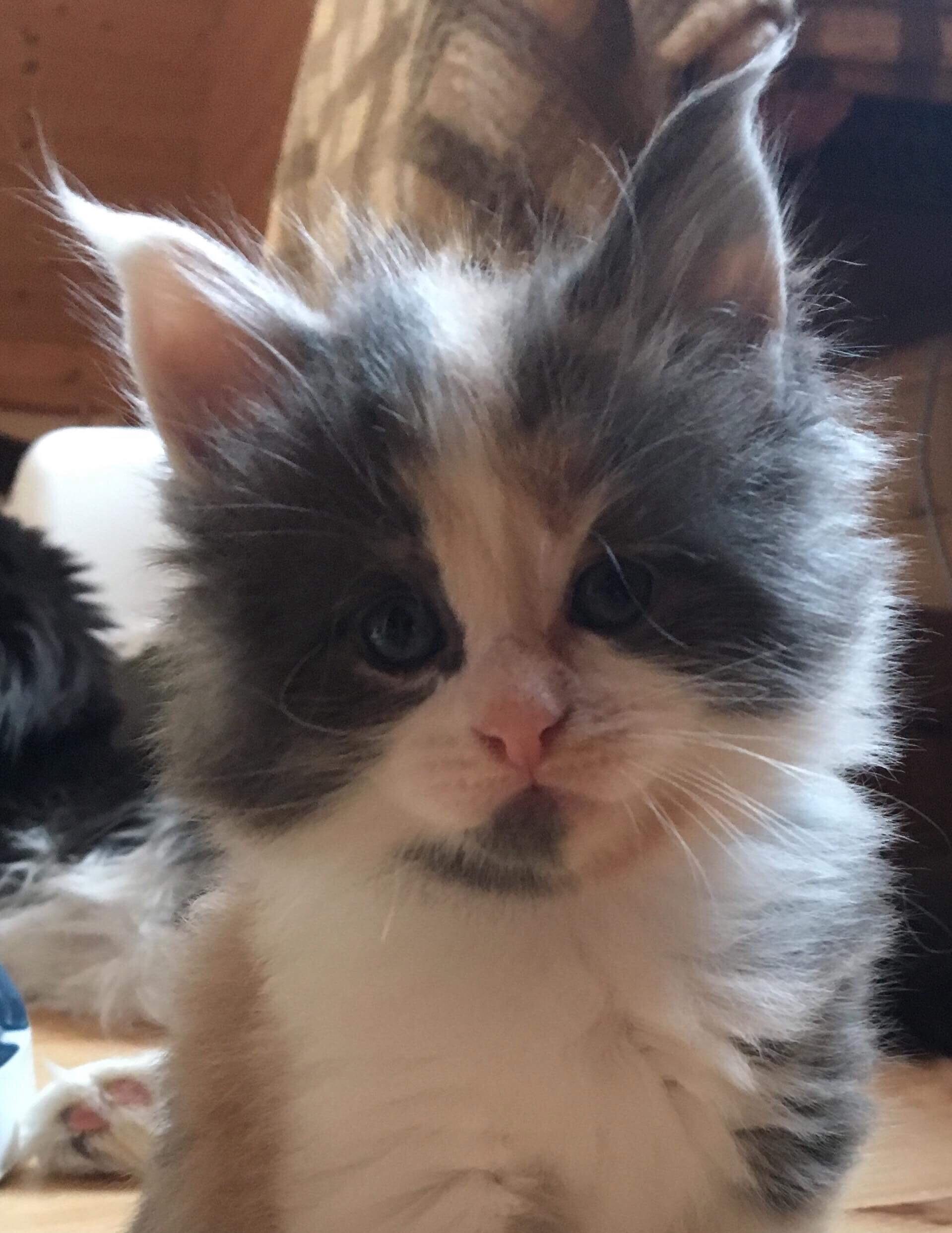 kočka 367VRH E     21.11.2017